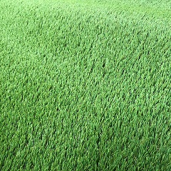 Artificial Grass 30mm (price per m2) 2mtr Wide Valour