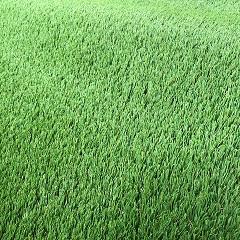 Artificial Grass 30mm (price per m2) 2mtr Wide Valour